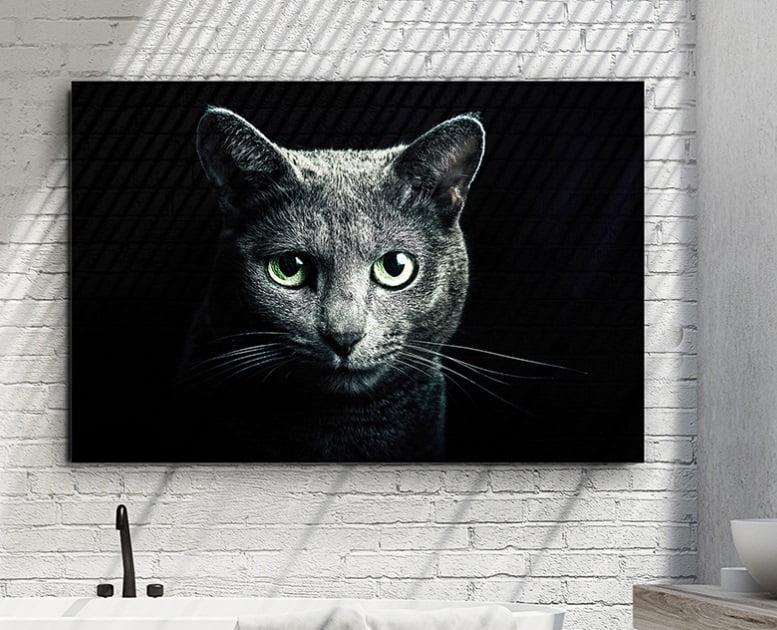 Фотографія в склі Schuller Felino 120x80